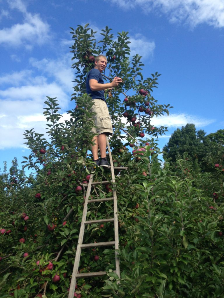 Kevin apple picking